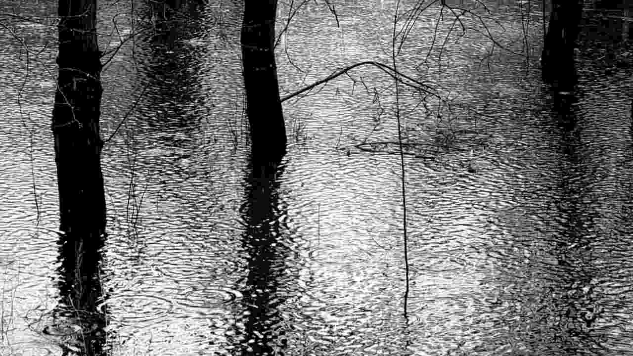 Trees in flooded ground