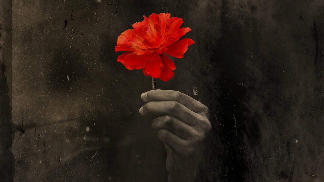Hadestown - a single red flower held in a hand against a dark background
