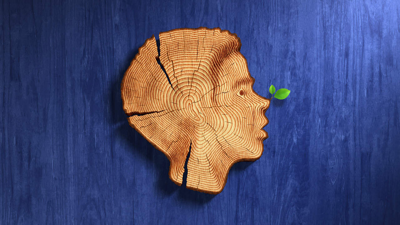 Pinocchio - profile of a young boy as a cross-section of a tree trunk